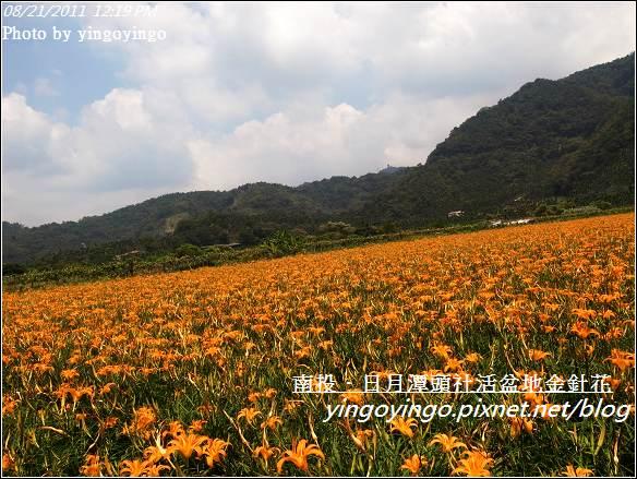 南投魚池_頭社活盆地金針花20110821_R0041569