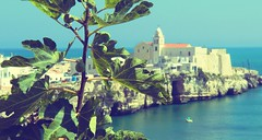 cartoline dalla Puglia [IV] (fi0na) Tags: blue light sea summer sky italy sun verde green colors leaves foglie landscape soleil italia mare colours dof estate blu couleurs vert colores bleu ciel cielo lumiere sole t paysage azzurro colori puglia luce italie paesaggio vieste vacanze citt prospettiva fico apulia paese gargano paesino fichi cittadina