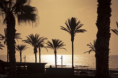 Palm Tree Invasion (Gilderic Photography) Tags: ocean voyage trip travel light sunset sea summer vacation sky mer holiday reflection tree nature water silhouette backlight canon landscape eos gold islands golden vacances spain eau raw lumire horizon playa canarias palm atlantic espana reflet ciel lumiere tenerife trunk canary canaries seashore espagne arbre islas contrejour palmier ete tronc lasamericas lightroom iles atlantique 500d gilderic