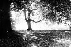 ... (life outside the fish bowl) Tags: trees light shadow summer bw sun tree leaves island bright bn explore devon devonshire totnes southhams vire vireisland explored darrenfarmer darrenfarmerexplore lifeoutsidethefishbowl