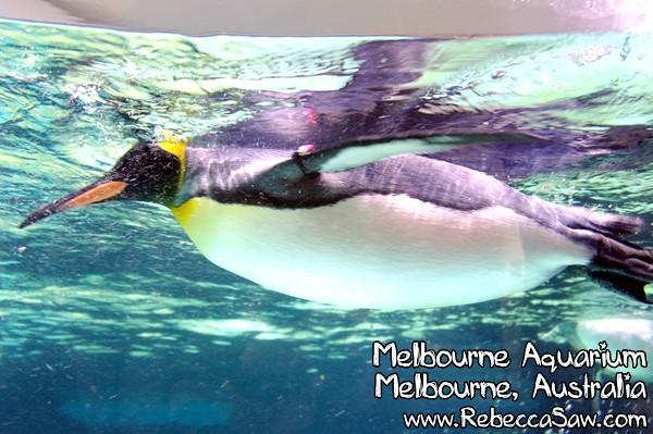 MELBOURNE AQUARIUM-21