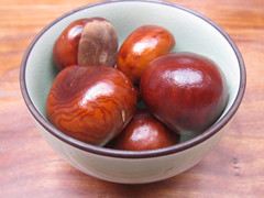 First conkers