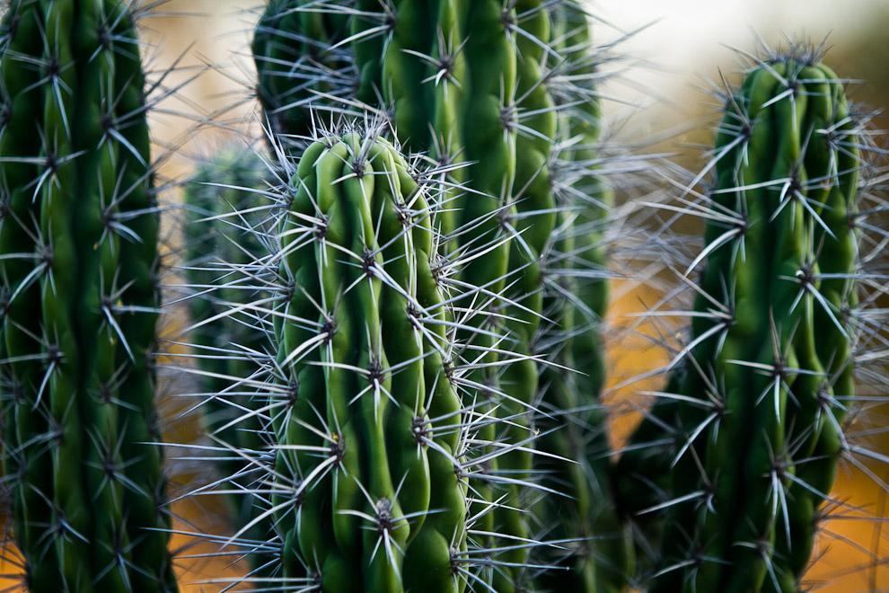 Plantas de cactus se observan regularmente en el paisaje de la flora chaqueña, donde los meses de sequía son marcados de un intenso calor, mucho viento y una gran cantidad de polvo.  (Tetsu Espósito)