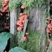 Wet weather brings out the fungi in Schroon Lake. Photo: Helene Vanderburgh.