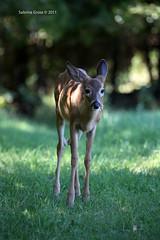 IMG_0838 (sabrina_gross78) Tags: park canada animal animals quebec omega animaux naturepark parcomega montebello omegapark