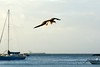 Flaps and landing gear down (jozioau) Tags: fishing booby sal70400g
