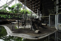 Orangutang Play Ground