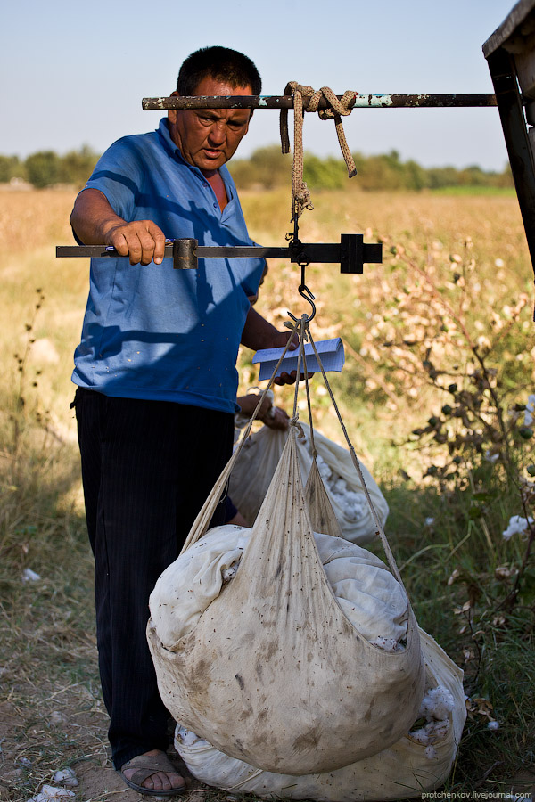 Cotton harvesting