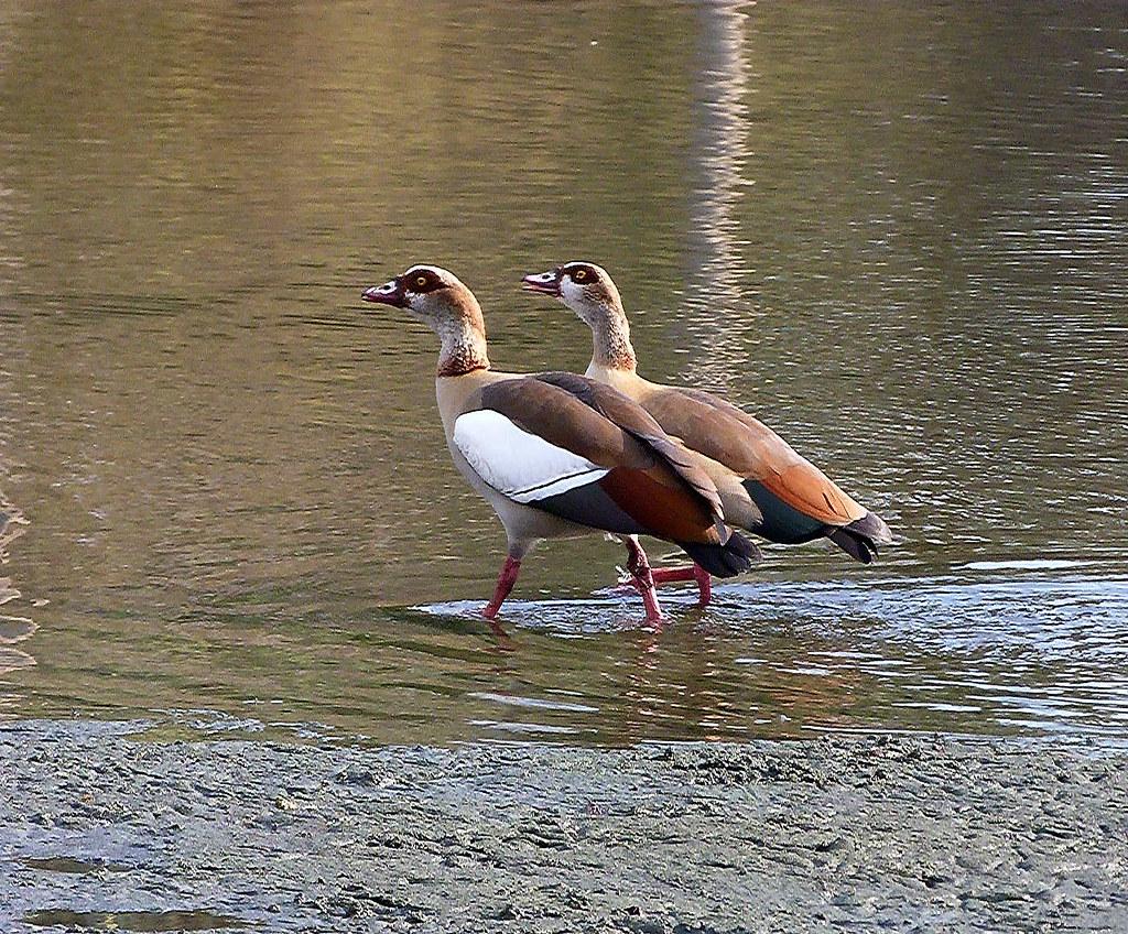 01-10-2011-birds-listen-dear-ders-something-i-gotta-tell-u