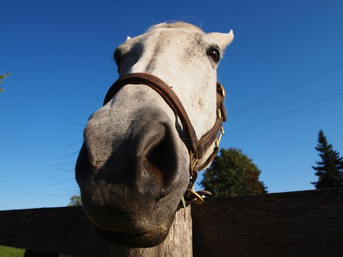 road trip - horse (nose)