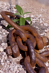 Chocolate Chain + Green (Petur) Tags: plant green abandoned metal rust iron stones chocolate decay rusty chain oxidation weathered nut crusty corrosion patina shackle