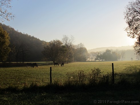 Autumn morning in Donkeyland 2 - FarmgirlFare.com