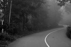 Flowing curves (stalin.sm) Tags: mist kerala wayanad mistymorning vythri padinjarathara