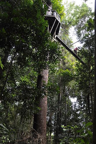 _DSC0064-p700 canopy walk