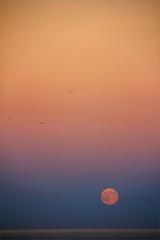 full moon rise (bNat!) Tags: barcelona park pink blue parque sea moon seagulls azul mar mediterranean mediterraneo pastel forum bcn luna full fullmoon blau tones parc rosy tons lluna plena llena rosado mediterrani rosat tonos gavines gabiotas ilovebcn viscabcn oooohcamacuuu