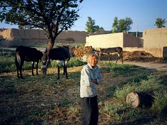. (GraemeNicol) Tags: china morning portrait woman asia village donkeys donkey fields farmer hebei zhangjiakou fujiga645zi