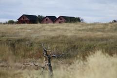 Old and weathered (gardenin' mom) Tags: old canada dof farm rustic farmland twig weathered farmbuildings deadbranch abandonedfarmbuildings canoneosrebelt1i