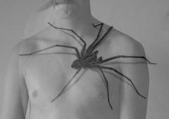 (Ellen Blocksidge) Tags: spider fear arachnophobia flickraward flickraward5