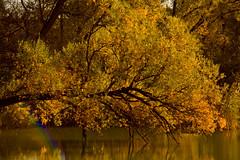Walking tree... (annekevandekassteele) Tags: autumn nature natureplus treesdiestandingup canoneos550d mothernaturegreenearth
