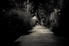 Night Walk (Lyokia) Tags: seattle street bw night sidewalk bushes