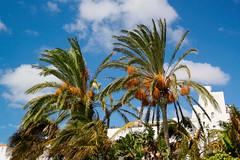 Fuerteventura 1055