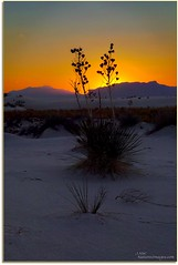 White Sands Nat.Mon.Sunset, NM (JMW Natures Images) Tags: newmexico parks sunsets professionalphotographer nationalmonuments winterlandscapes photoworkshops phototours whitesandsnationalmonumnet phototourguide jmwnaturesimagescom dynamichdr5 audiovisualphotopresentations