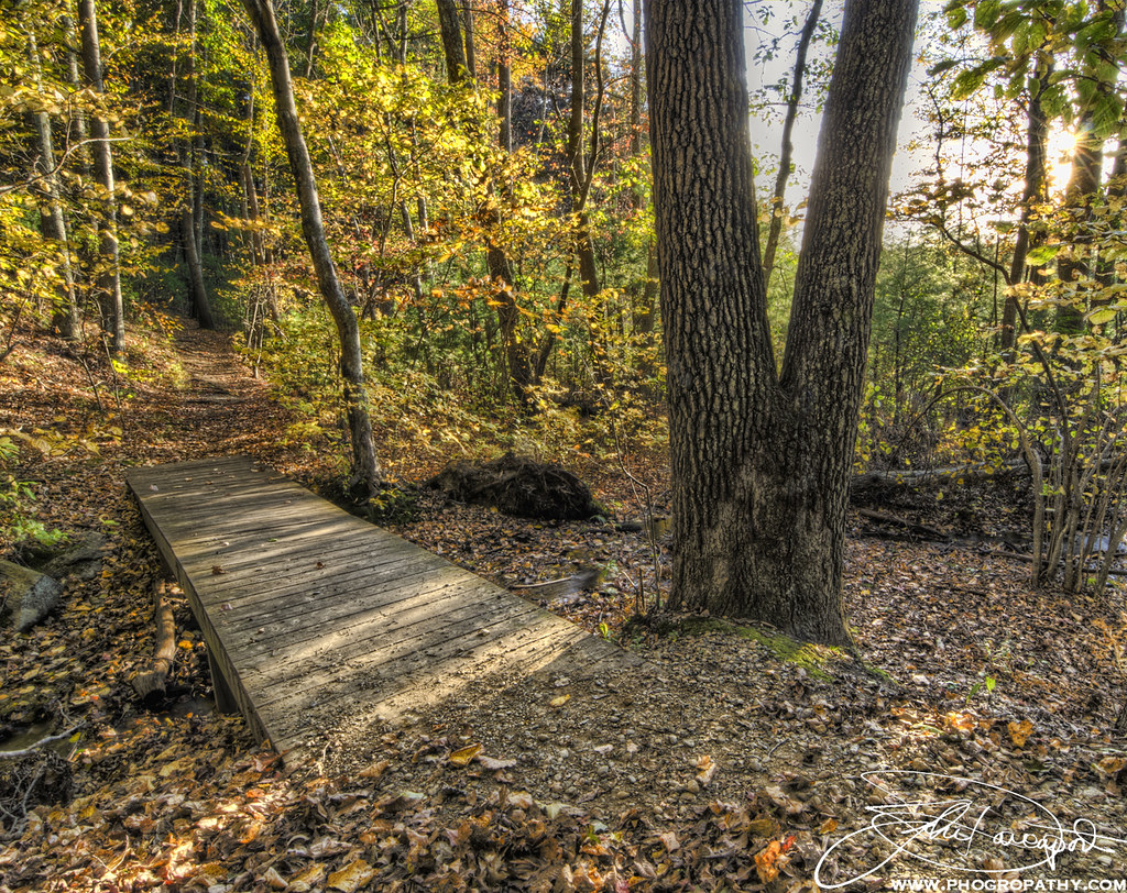 Small Bridge in the Woods