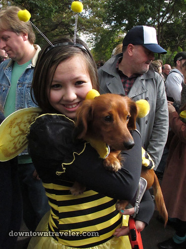 Tompkins Park Halloween Dog Parade_Dachshund in Bumble Bee costume