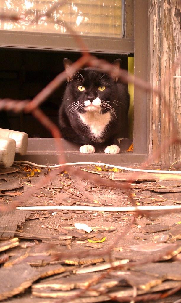 Feral kitty in Williamsburg
