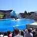 Sea World with SYR - 048