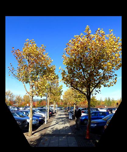 [43/52] Autumn