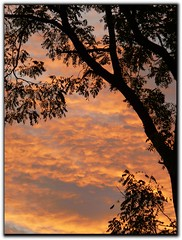 Tree At Sunset .[Explore]Oct 29, 2011 #213 (Kat~Morgan) Tags: sunset sky tree sihouette mygearandme mygearandmepremium mygearandmebronze dblringexcellence galleryoffantasticshots