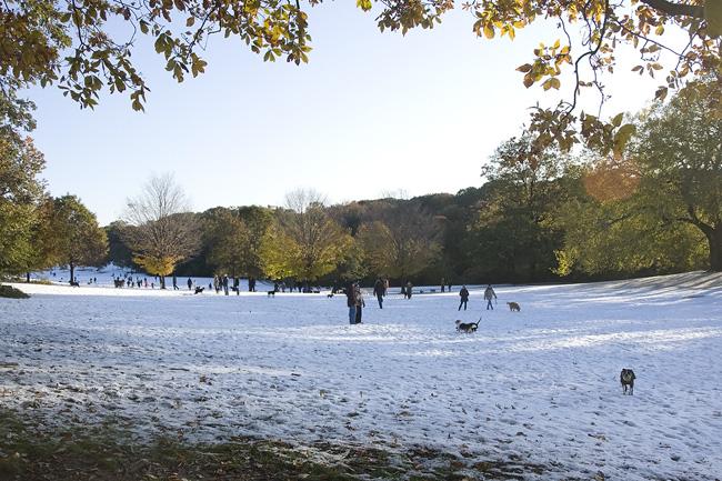 Prospect Park fall snow