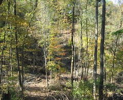 Mixed hardwood stand following a selective harvest.