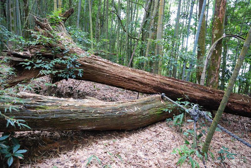 2011_1026水社大山DSC_2962