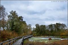 *** (JL) Tags: automne marais arbre tang passerelle gunes