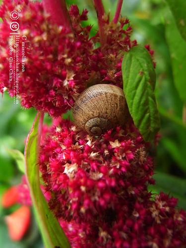 Bonjour Giverny~ 吉維尼 Jardins de Monet 莫內花園R1041402