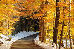 DSC_0795 (Putneypics) Tags: autumn snow fall rural forest october vermont snowstorm foliage dirtroad backroad putney putneypics