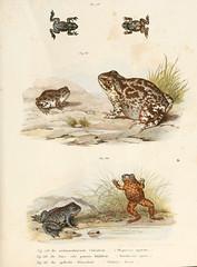 n202_w1150 (BioDivLibrary) Tags: harvarduniversity amphibians reptiles mcz ernstmayrlibrary pictorialworks bhl:page=4024278 dc:identifier=httpbiodiversitylibraryorgpage4024278