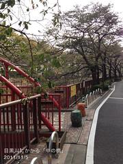 朝散歩(2011/11/5): 目黒川の「中の橋」