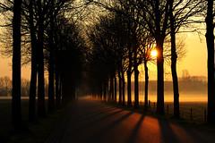 Misty Morning (jonasfj) Tags: morning trees netherlands fog sunrise alley 100mm zutphen carlzeiss makroplanar baak d700 carlzeiss100mmmakroplanar