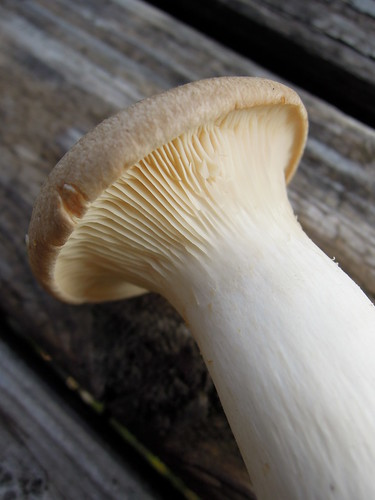 Trumpet Royale Mushrooms