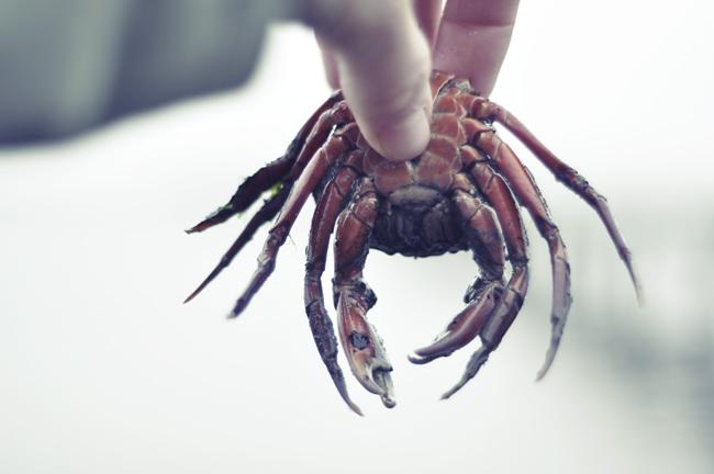 krabban