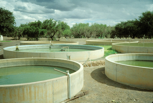 Fish hatchery, Malawi. Photo by Randall Brummett, 2002