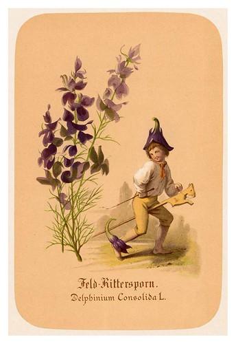 012-Espuela de caballero-Illustrirtes Kräuterbuch –Aquarelle- 1870-Adolf Schroedter