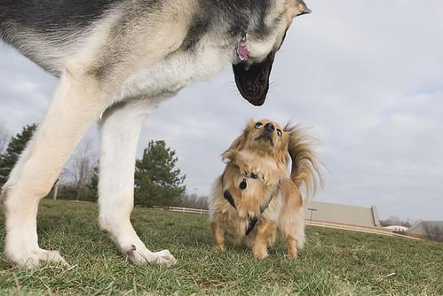 mendoza_dogs_06_62_15_4