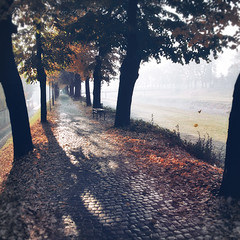 Infinity. Long Path. Tanjica Perovic Photography. (Tanjica Perovic) Tags: morning november autumn trees light mist fall nature leaves fog backlight bench walking photography vanishingpoint shadows path walk serbia atmosphere quay cobblestones squareformat getty riverbank distance gettyimages treealley srbija floodbarrier longpath pirot kej canoneos400d sigma1770mmf2845dcmacro pirotskikej нишава kejnanisavi кејнанишави pirotserbia pirotkej pirotsrbija тањицаперовић tanjicaperovicphotography availableforlicensingongettyimages personinthedistance fotografijepirota barrieragainstflooding svetozarmisirlic floodingprotection