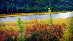 Autumn in Alaska - Landscape (blmiers2) Tags: travel autumn trees green fall nature water colors alaska landscape photography nikon coolpix s3000 2011 blm35