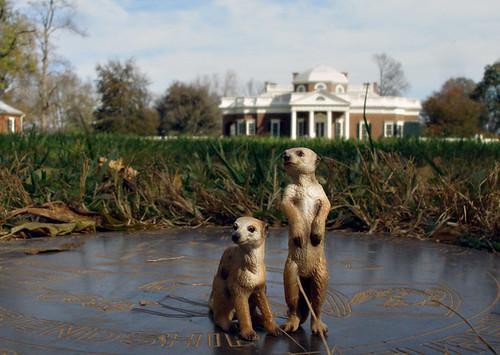 Meerkats at Monticello