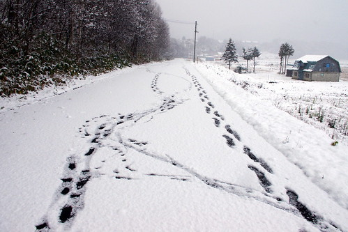 2011.11.15 雪景色初日6